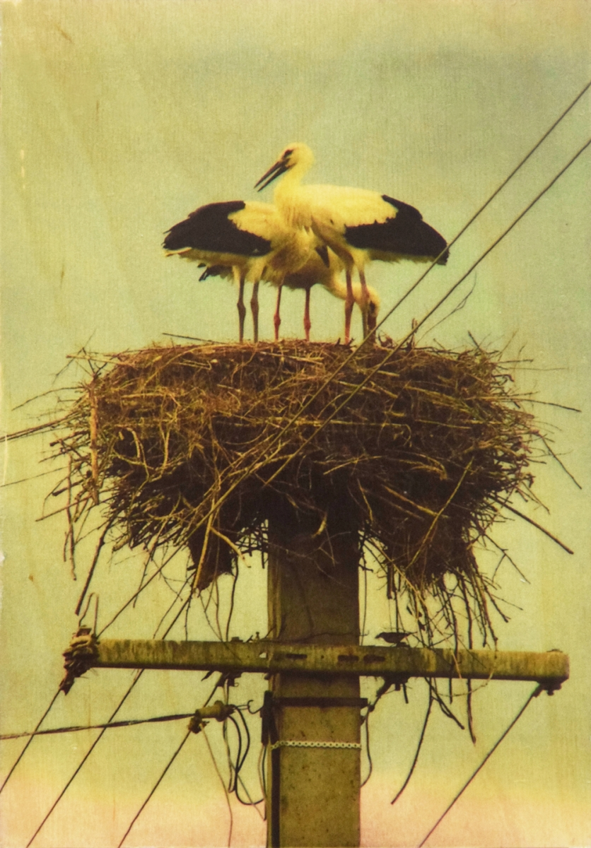 Seartworks-Selin-Le-Bagousse-Stork-Tales-1