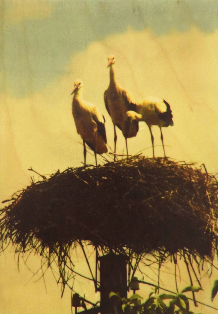Seartworks-Selin-Le-Bagousse-Stork-Tales-10