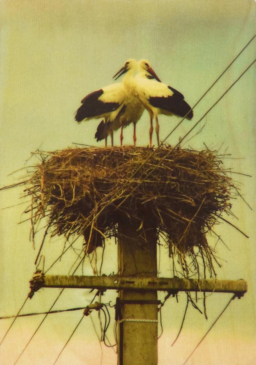 Seartworks-Selin-Le-Bagousse-Stork-Tales-2